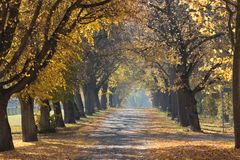 Autumn avenue Royalty Free Stock Images