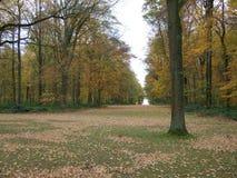 Autumn Avenue degli alberi sulla Somme immagini stock