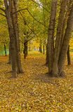 Autumn avenue. The avenue in the early fall in the hall an attire Royalty Free Stock Images