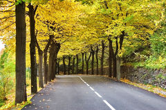 Autumn avenue Stock Photos