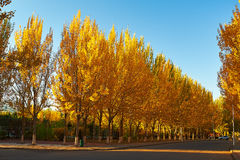 The autumn avenue Royalty Free Stock Images