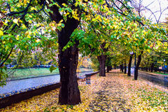 Autumn avenue Royalty Free Stock Photos