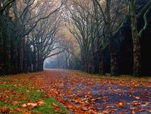 Autumn avenue in Stettin Stock Photography