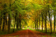 Autumn Avenue of Trees Royalty Free Stock Image
