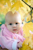Autumn baby. A child in yeloow maple leaves in autumn royalty free stock images
