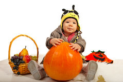 Autumn baby boy with bee hat. Holding big pumpkin against white background Stock Photos