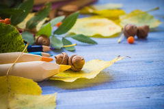 Autumn back school acorns and school Royalty Free Stock Photography