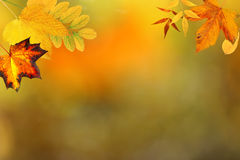 Autumn backdrop Royalty Free Stock Photo