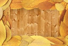 Autumn backdrop with cherry leaves on table Stock Images