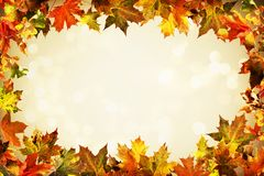 Autumn backdrop of colorful autumn leaves Royalty Free Stock Image