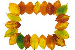 Autumn backdrop - frame composed of colorful autumn leaves Royalty Free Stock Photos