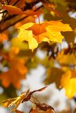 Autumn Background 1 Royalty Free Stock Photo