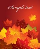 Autumn background,  Stock Images