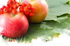 Autumn background. Apple, ash garden Stock Image