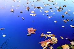 Autumn background. Royalty Free Stock Photo