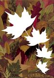 Autumn background. With four white leaves for your text Royalty Free Stock Photo