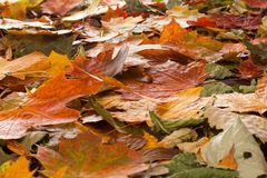 Autumn background. Colorful autumn background with differend leaves stock photo