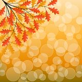 Autumn background Royalty Free Stock Images
