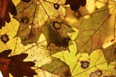 Autumn background. Stock Image