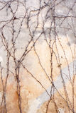 Autumn background. Nice gray and yellow pastel background with climbing branches Royalty Free Stock Photos