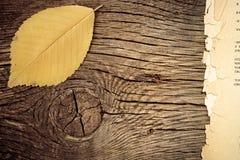 Autumn background. Autumn leaf on wood texture royalty free stock photo
