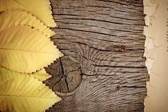 Autumn background. Autumn leaf on wood texture stock photo