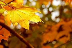 Autumn Background 2 Royalty Free Stock Photography