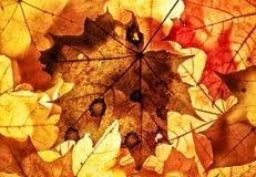 Autumn background. Stock Photo