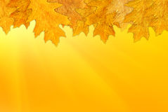Autumn background. A beautiful autumn background with leaves Royalty Free Stock Photos