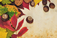 Autumn background. Colorful fall leaves and autumn fruits on water color background Stock Photo