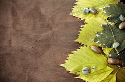 Free Autumn Background Stock Photos - 22494243