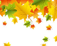 Autumn background Stock Image