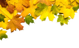 Autumn background Stock Images