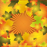Autumn background. With colorful leaves of maple vector illustration