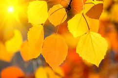 Autumn background. Royalty Free Stock Photos