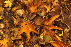 Autumn background. With dry leaves Stock Photo