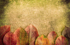 Autumn background. Autumn leaves on a wooden background Royalty Free Stock Photos