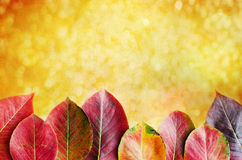 Autumn background. Beautiful autumn background with pear leaves Stock Image