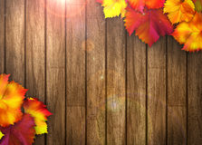 Autumn Background Royalty Free Stock Photography
