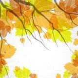 Autumn Background. Arkivfoto