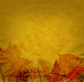 Autumn background. Paper texture background with autumn leaves and branches Stock Photos