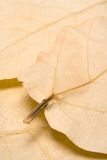 Autumn Background. Dry leaves forming a nice background Royalty Free Stock Photography