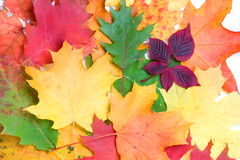 Autumn background Stock Image
