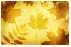 Autumn background. Autumn leaves on an old paper Royalty Free Stock Photos
