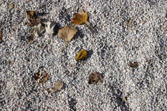 Autumn background. Dry leafs on white gravel royalty free stock photography