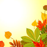 Autumn background. Autumn abstract background with leaf. eps 10 Royalty Free Stock Photo
