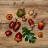 Autumn background with acorns royalty free stock image