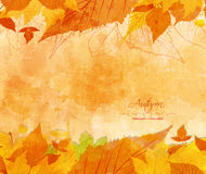 Autumn background with acorns and leaves Royalty Free Stock Photo
