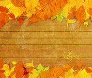 Autumn background with acorns and leaves Royalty Free Stock Image