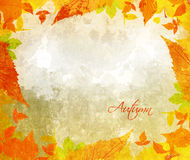 Autumn background with acorns and leaves Stock Photos